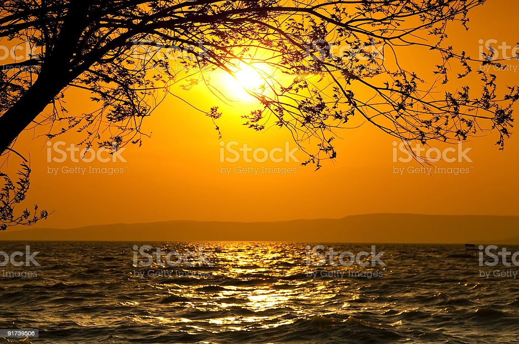 sunset with tree royalty-free stock photo