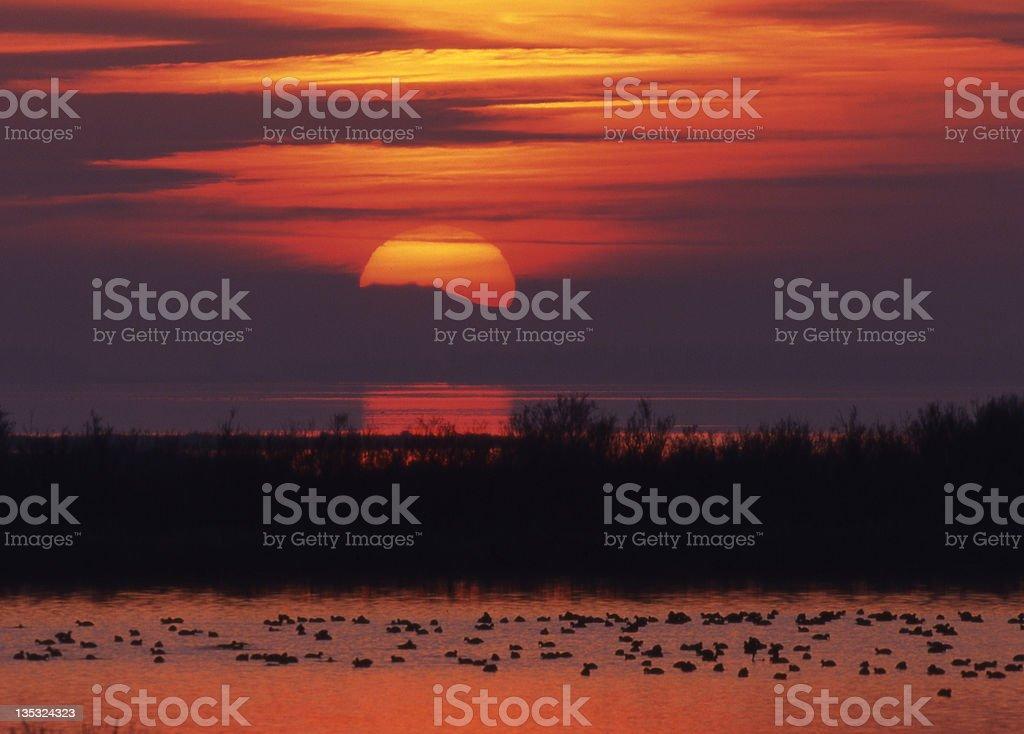 Sunset with waterbird stock photo