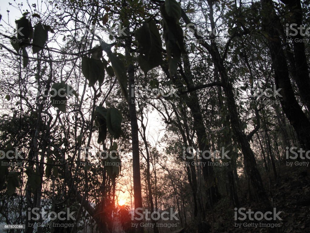 Sunset within the trees stock photo