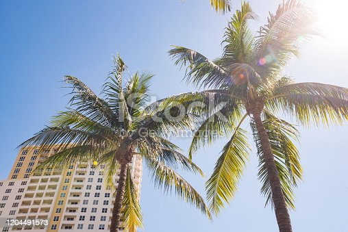 Sunshine and Palm Trees by Hotel in Downtown Fort Lauderdale Florida