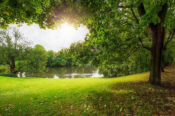 sunshine and trees in vigeland park, oslo, norway - staw woda stojąca zdjęcia i obrazy z banku zdjęć