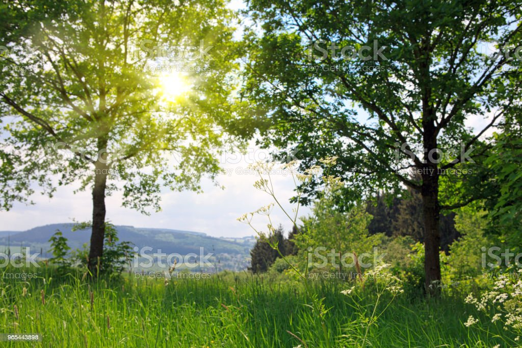 Sunshine and two trees. Summer background royalty-free stock photo