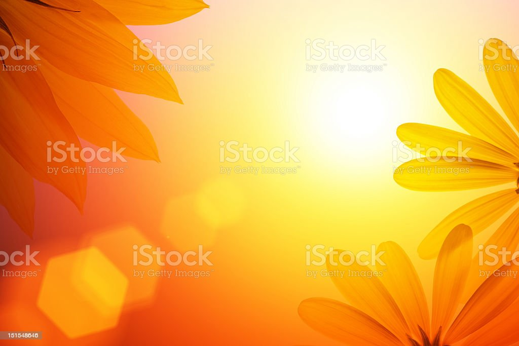 Sunshine background with sunflower details. stock photo