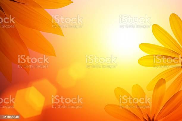 Photo of Sunshine background with sunflower details.