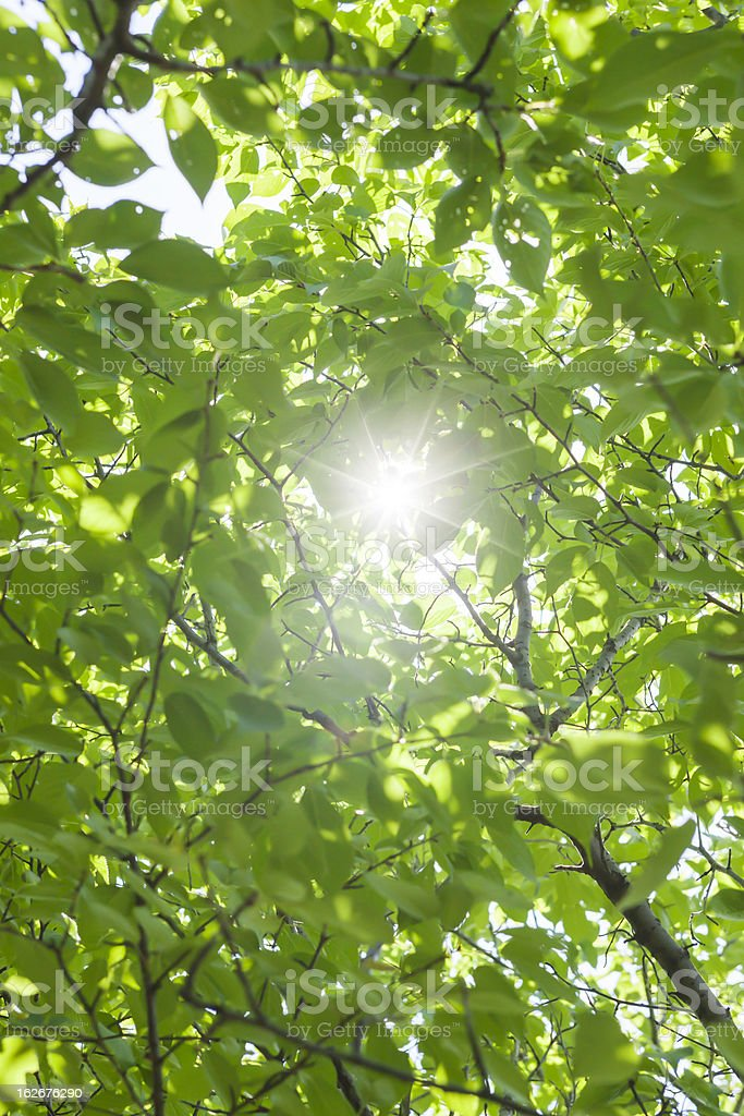 Sunshine filtering through foliage royalty-free stock photo