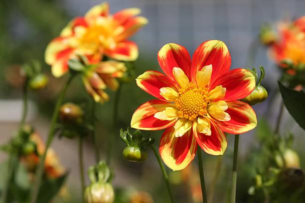Sunshine Flower bildbanksfoto