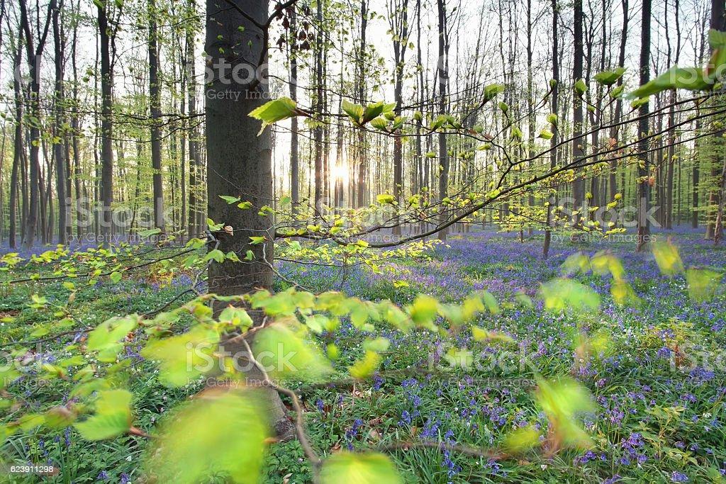 sunshine in spring flowering forest stock photo