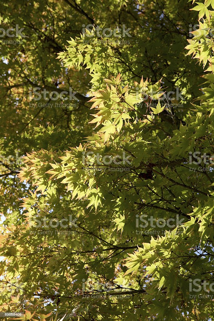 Sunshine in The Trees royalty-free stock photo
