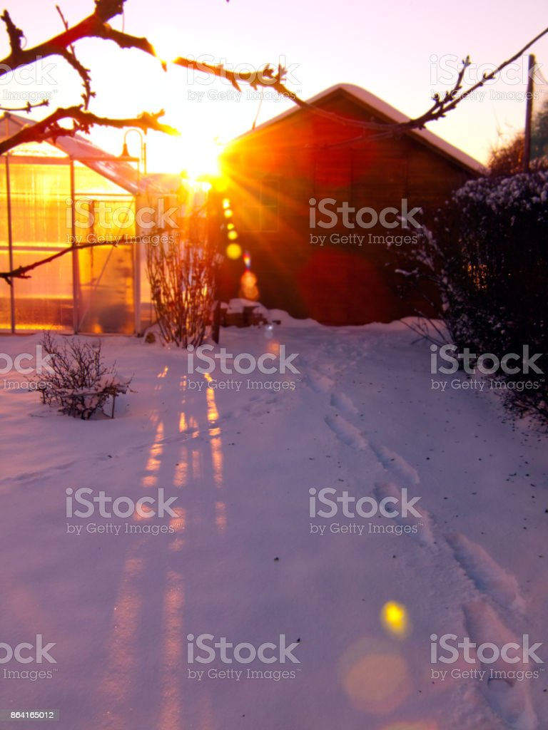 Sunshine in the winter garden royalty-free stock photo