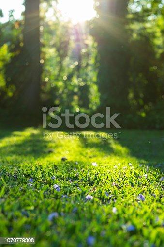 istock Sunshine on grass with purple flowers 1070779308