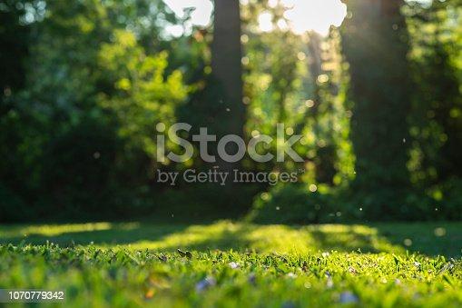 istock Sunshine on grass with purple flowers 1070779342