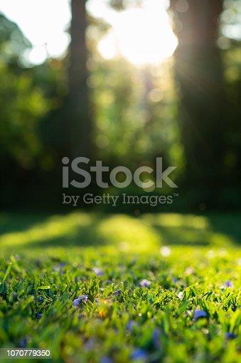 istock Sunshine on grass with purple flowers 1070779350