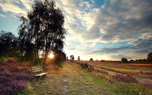 sunshine over bench by birch tree