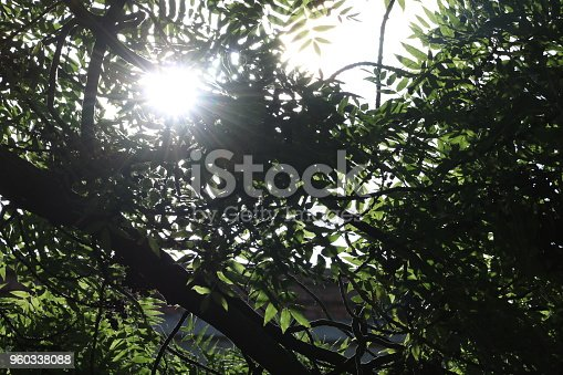 istock Sunshine. Sky. Bright sun in the sky. Sunlight circles. A solar circle, a bright solar flare, rays in green branches, rays in green trees. Sunset. Sun in the garden. 960338088