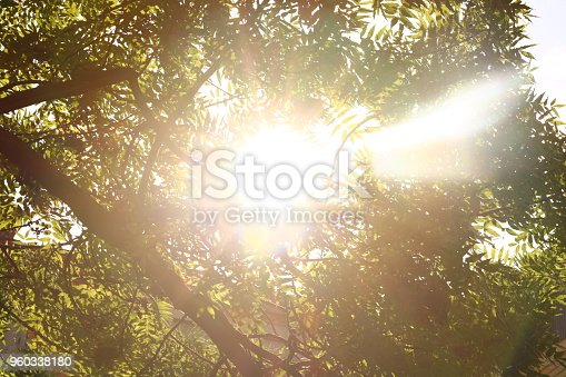 istock Sunshine. Sky. Bright sun in the sky. Sunlight circles. A solar circle, a bright solar flare, rays in green branches, rays in green trees. Sunset. Sun in the garden. 960338180