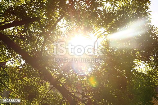 istock Sunshine. Sky. Bright sun in the sky. Sunlight circles. A solar circle, a bright solar flare, rays in green branches, rays in green trees. Sunset. Sun in the garden. 960338228
