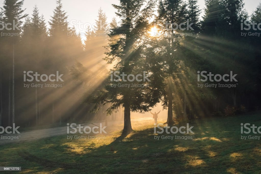 Sunshine that dispels the thick fog in the Carpathian forest stock photo