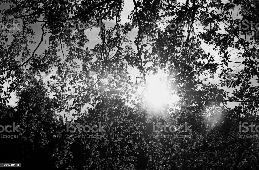 Sunshine through leaves of tree background royalty-free stock photo