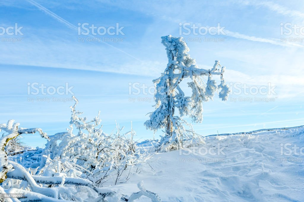 Sunshine under the winter calm mountain landscape with beautiful fir trees on slope stock photo
