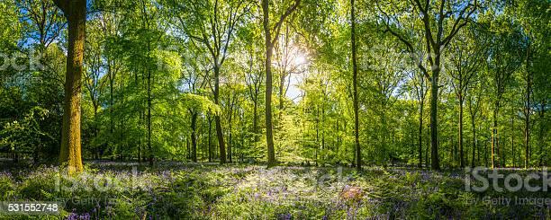 Photo of Sunshine warming idyllic woodland glade green forest ferns wildflowers panorama