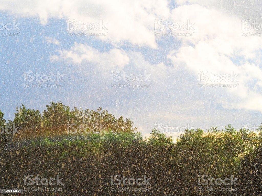 Sunshower or sun shower, meteorological phenomenon, rain falls, sun...