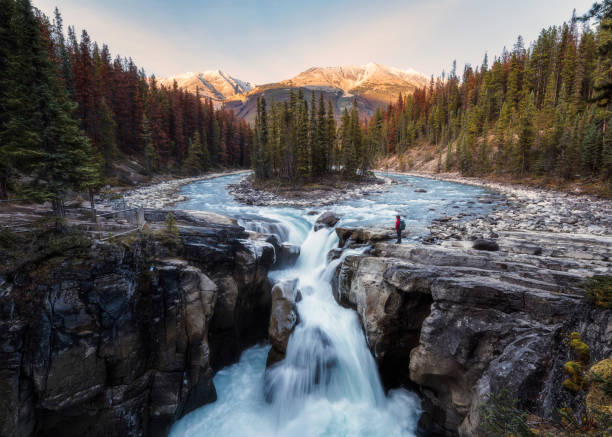 Sunwapta Falls is pair of of the Sunwapta river with traveler standing in autumn forest at sunset stock photo