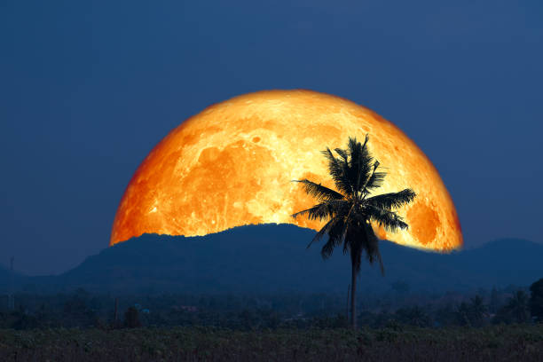 Super blood moon and silhouette coconut tree mountain in the night sky stock photo