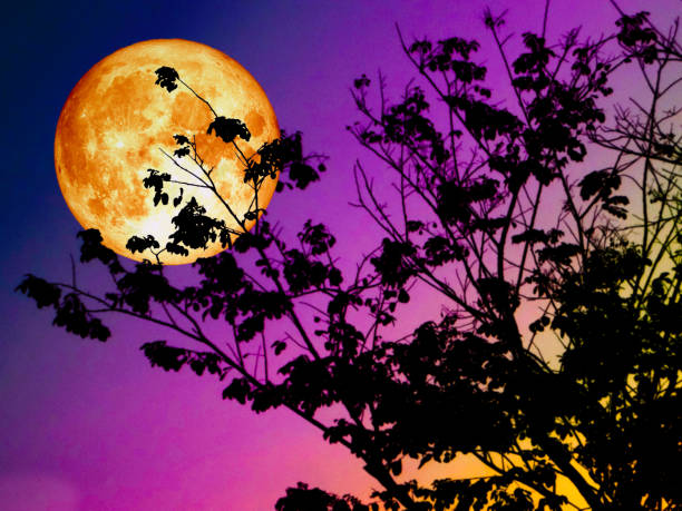 super blood moon back silhouette branch tree sunset stock photo