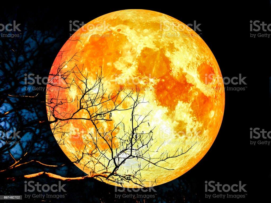 Super bloed maan silhouet droge boom foto
