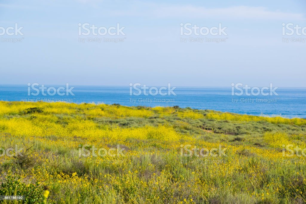 Super Bloom in Crystal Cove State Park stock photo