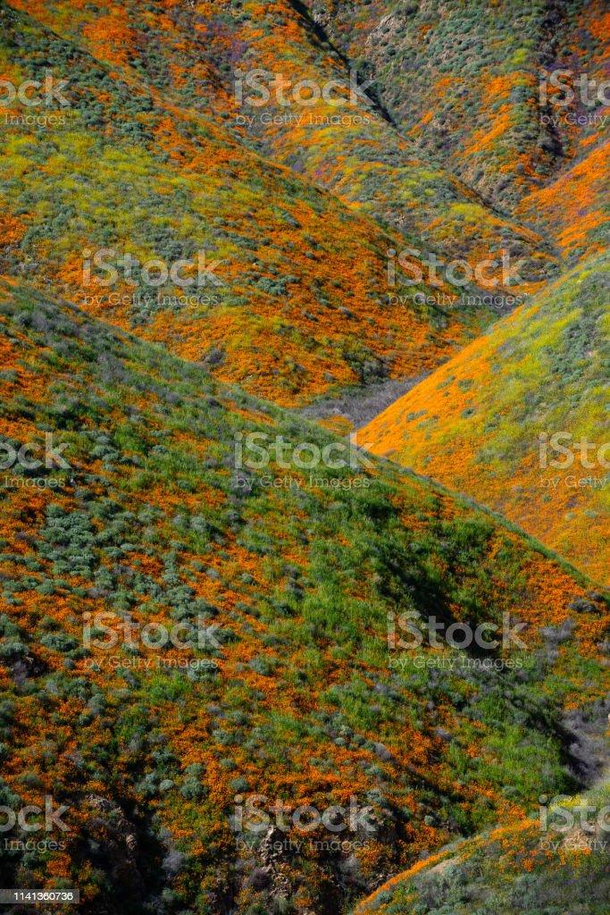 Super Bloom Lake Elsinore, Ca. Super Bloom 2019 Backgrounds Stock Photo