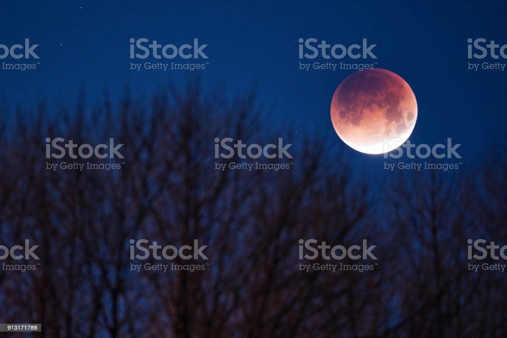 Super blauw bloed maan foto