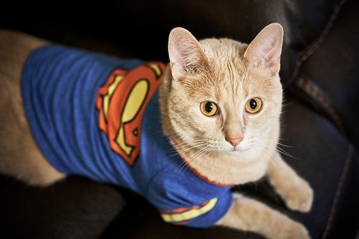 Super Cat in Tshirt