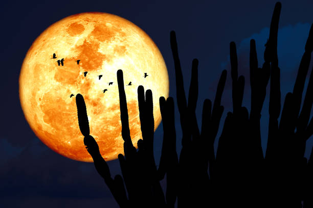 Super corn blood moon and silhouette cactus tree in the desert and bird flying on night sky, Elements of this image furnished by NASA stock photo