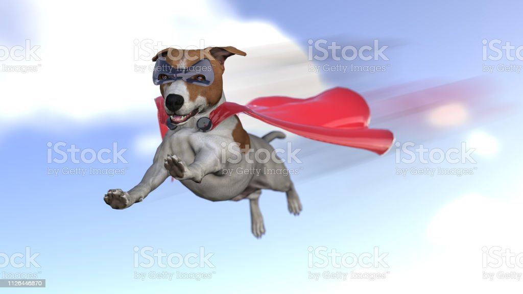 Super dog jack russel terrier in super hero costume with mask and...