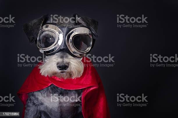 Super dog picture id170215984?b=1&k=6&m=170215984&s=612x612&h=ruquliifmaacn8rc1cxzbmqrytvh wnqqbx64mcmkje=