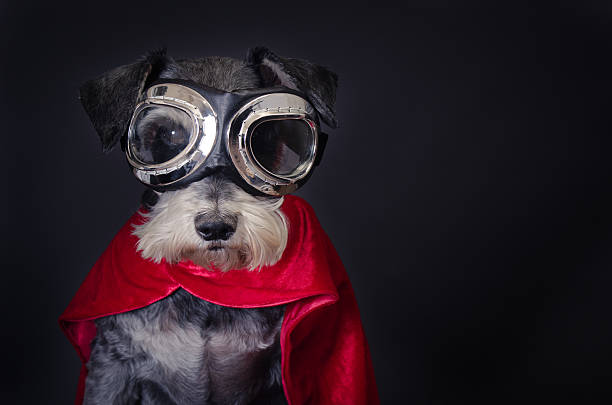 Super Dog stock photo
