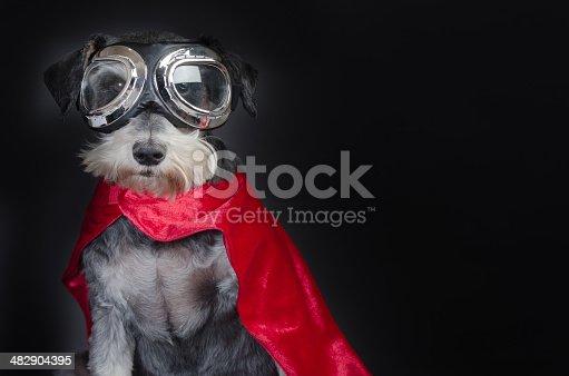 Beautiful little dog portrait in superhero costume
