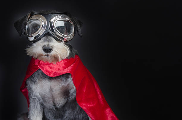 Super Dog Beautiful little dog portrait in superhero costume ski goggles stock pictures, royalty-free photos & images