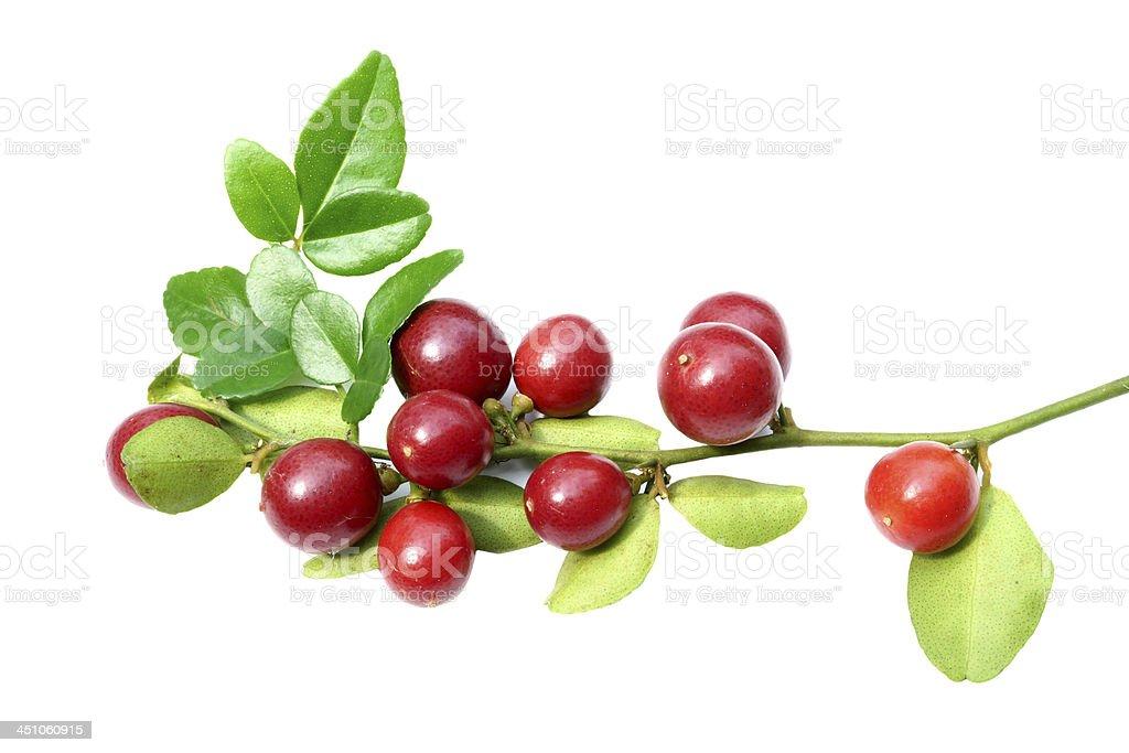 Super fruit, Scientific name Carissa carandas Linn. stock photo