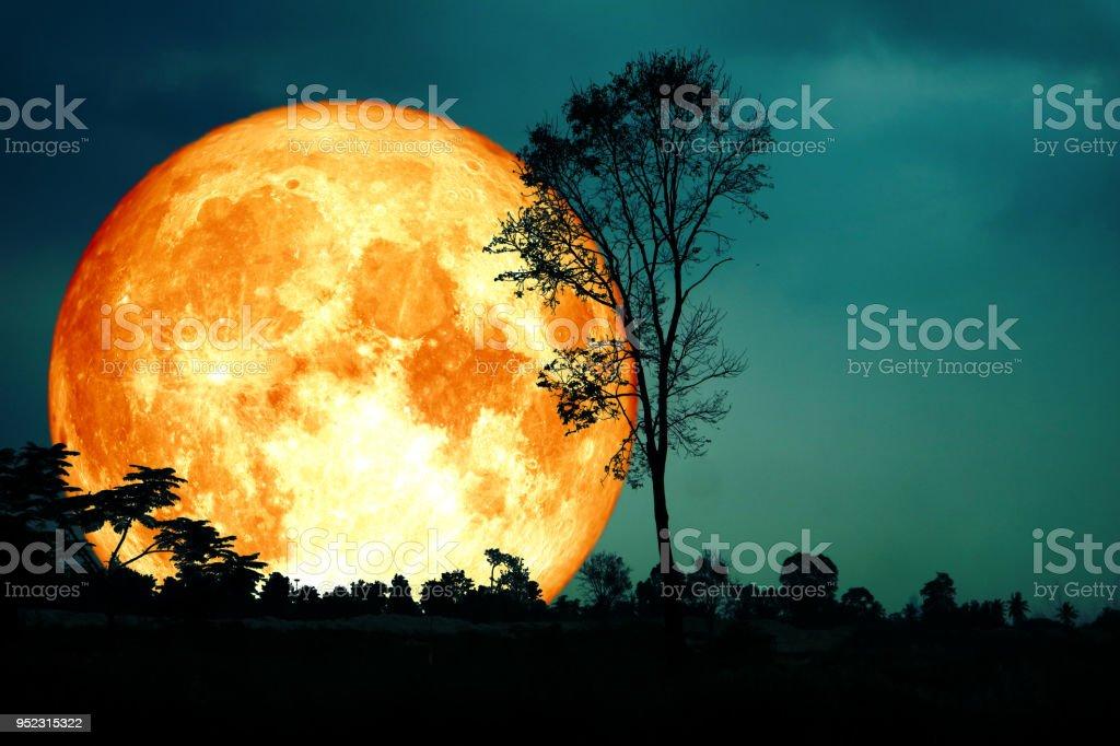 Super voll Blut Mond zurück Silhouette dunklen Wald Unschärfe Himmel – Foto