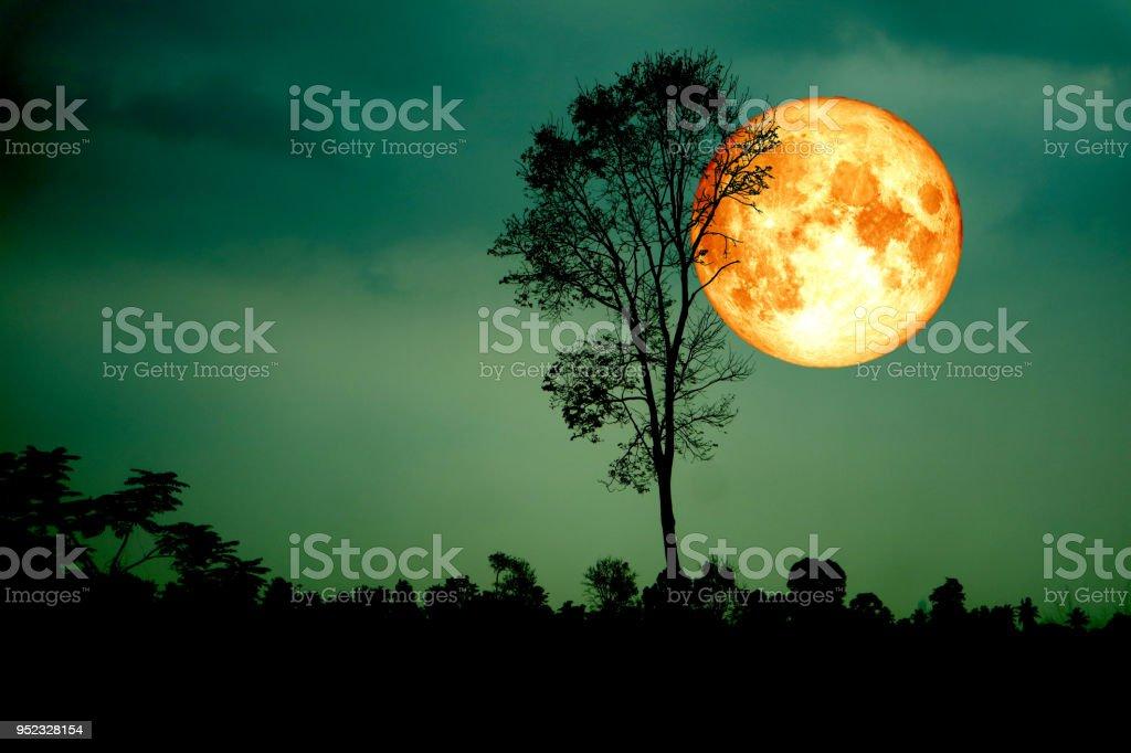 Super voll Blut Mond zurück Silhouette baum dunkel grünen Himmel – Foto