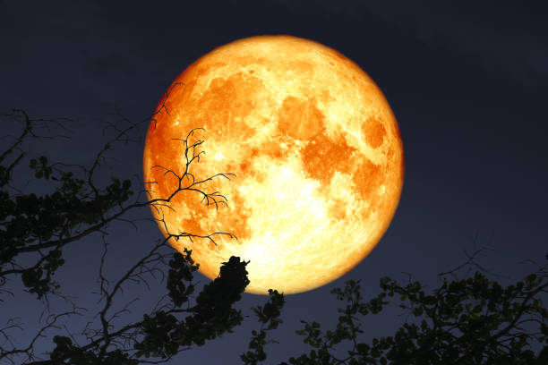 super full blood moon floats in dark night sky above the silhouette branch dry tree stock photo