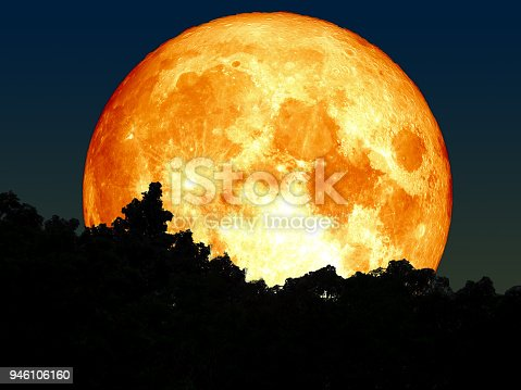 super full blood moon and silhouette tree in forest, Elements of this image furnished by NASA