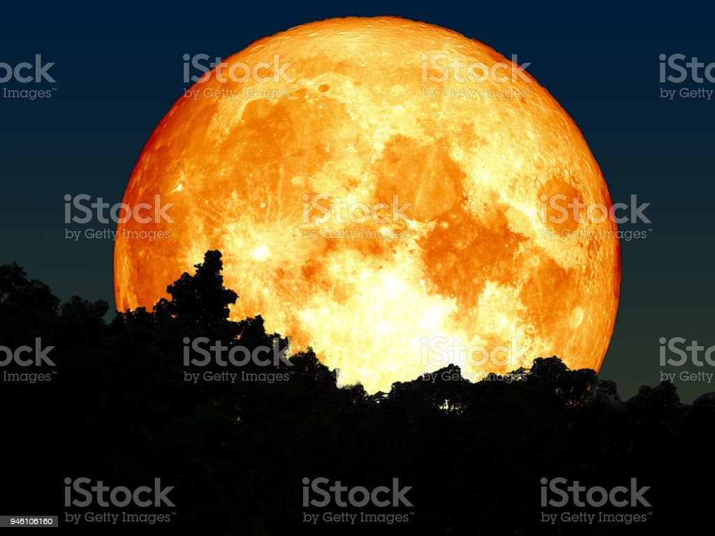 super full blood moon silhouette tree in forest stock photo