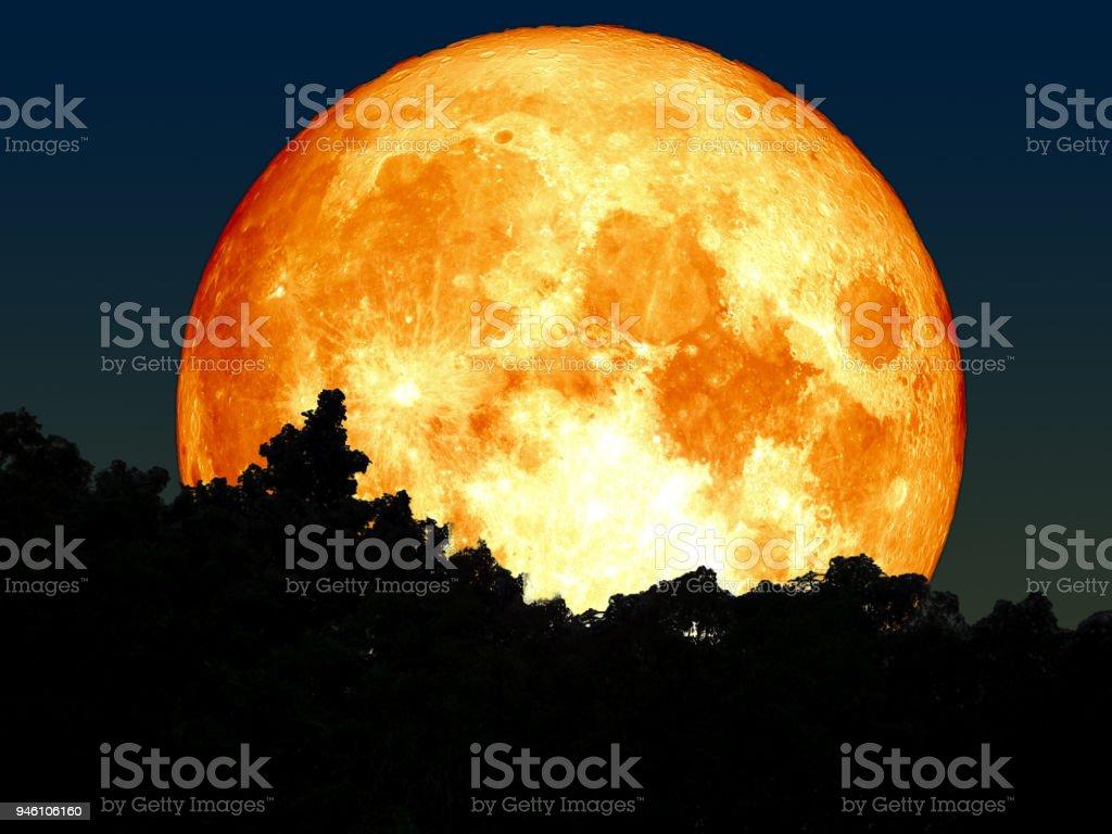 Super voll Blut Mond Silhouette Baum im Wald – Foto
