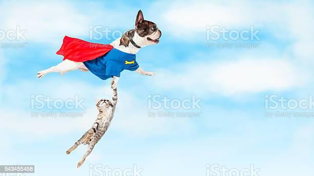 Super hero dog flying over white picture id543455458?b=1&k=6&m=543455458&s=612x612&h=ivdyrlbqflfnlubqvgf9v 3j3 nuk66m 0b eknegi4=