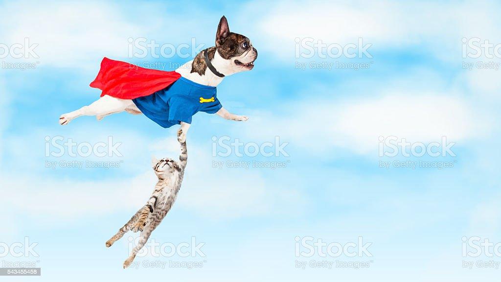Super Hero Dog Flying Over White stock photo