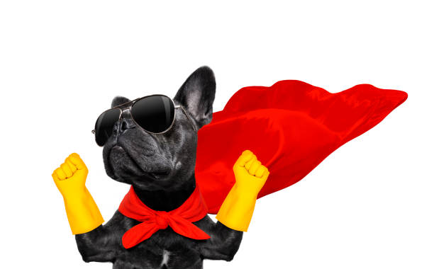 super hero dog stock photo