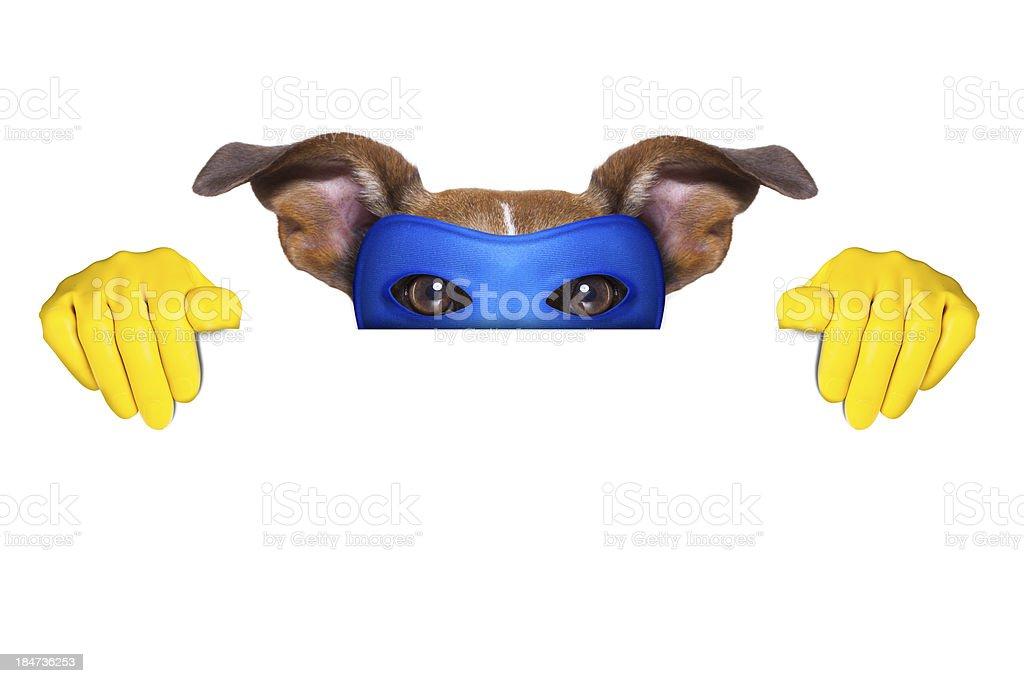 super hero dog royalty-free stock photo